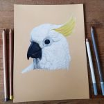 Hand drawn picture of a white cockatoo