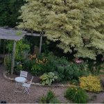 Photo of Ariel image of Clare's garden, showing gravel path, pergola and various plants and trees